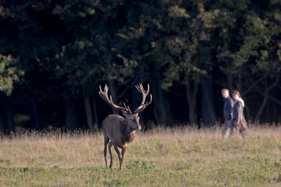 Hirsch und Wanderer